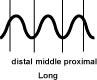 p.long The Long Pulse (Chang Mai)