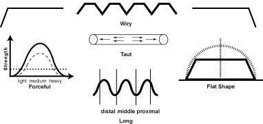 p.wiry The Wiry, String Taut, Taut, String Like, Bowstring Pulse (Xian Mai)